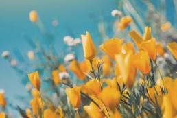 cartaz primavera